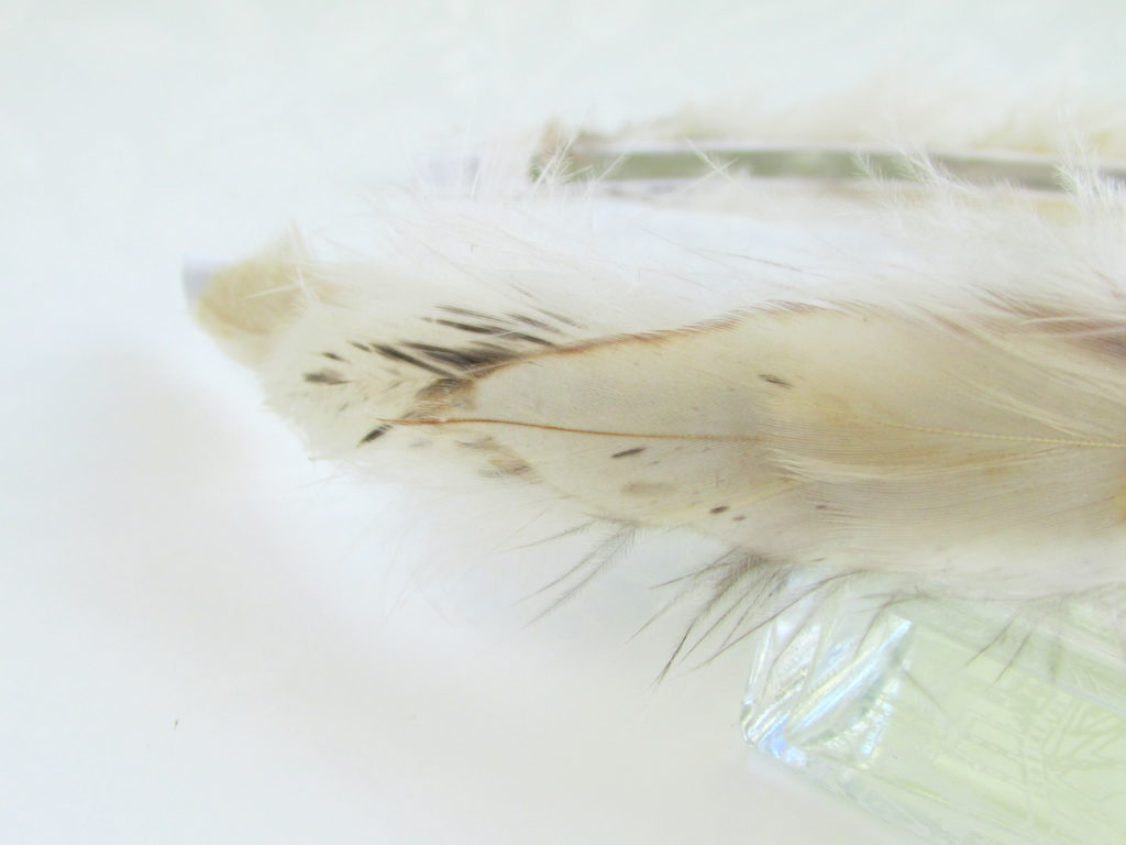 feather-closeup