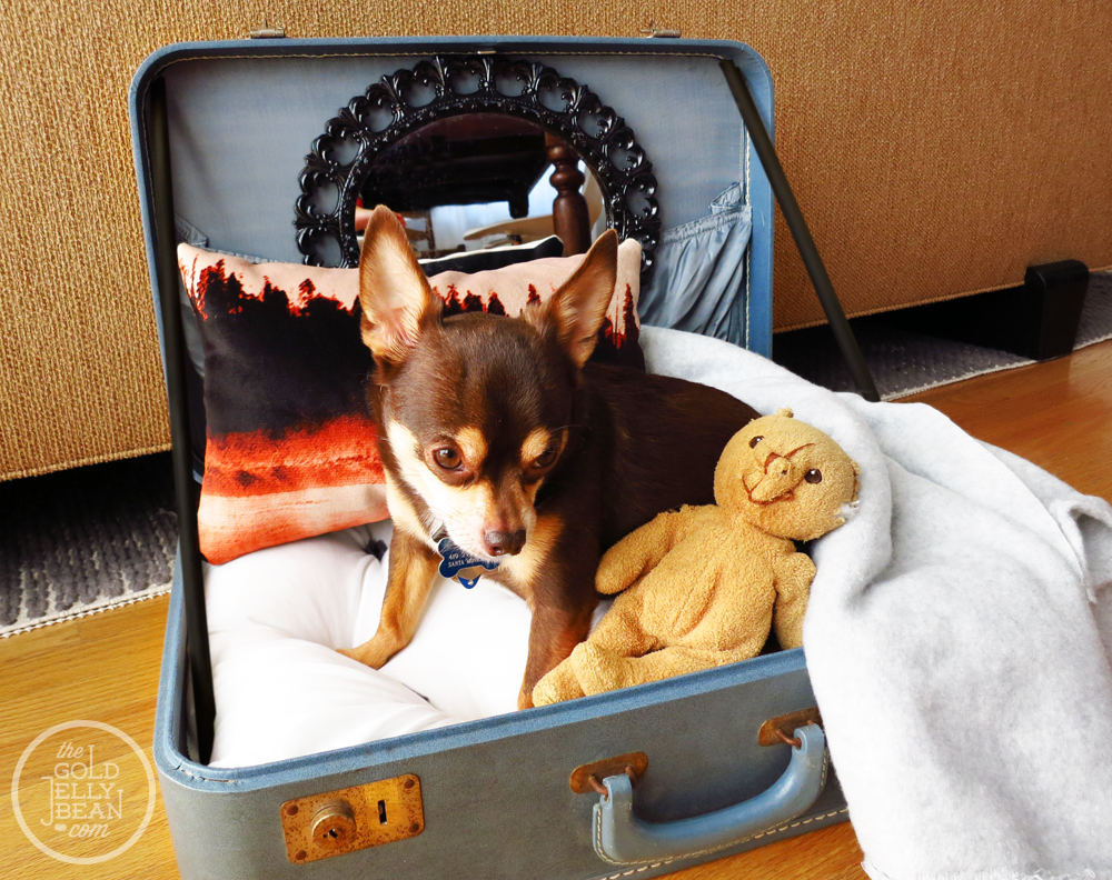 DIY Vintage Suitcase Dog Bed