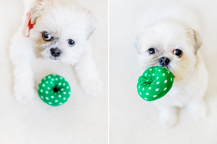 DIY Donut Toys For Dogs