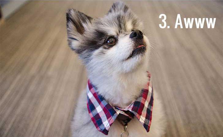 fancy plaid dog collar