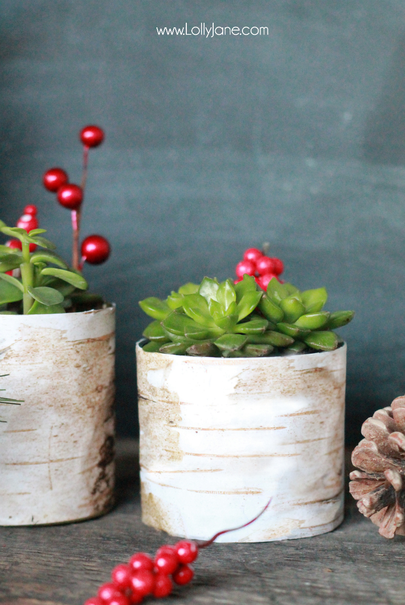 Birchwood Succulent Planter Holder