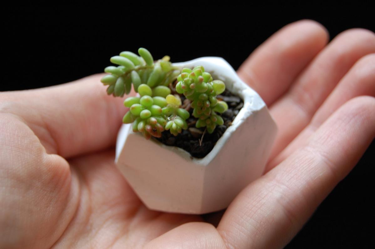 tiny polymer clay planter