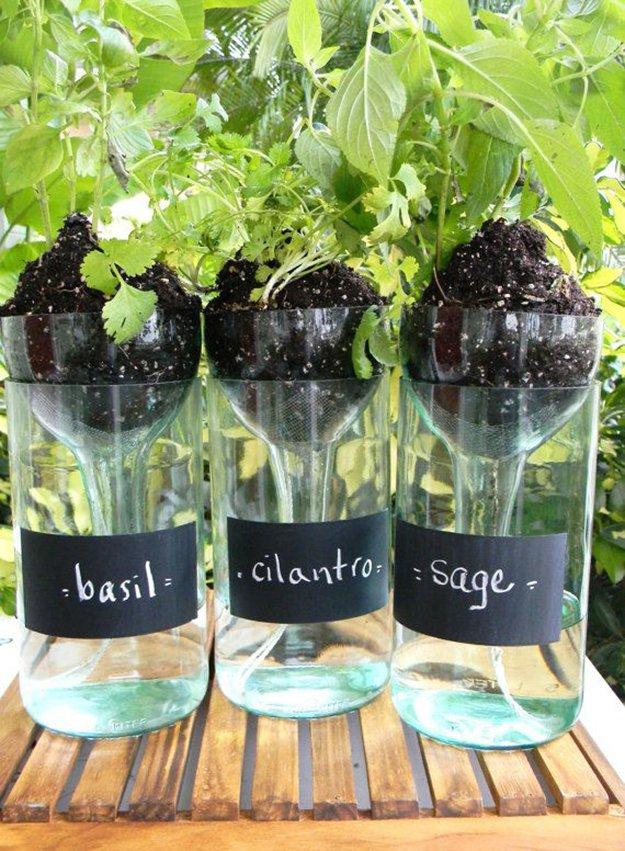 wine bottle self watering planter