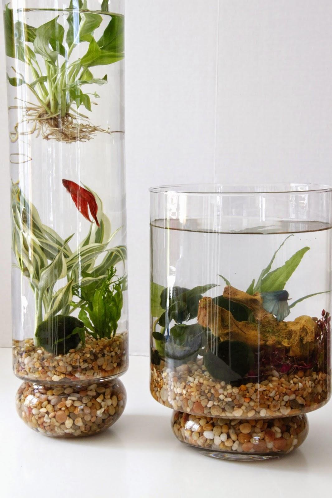 diy water garden - Diy Indoor Garden