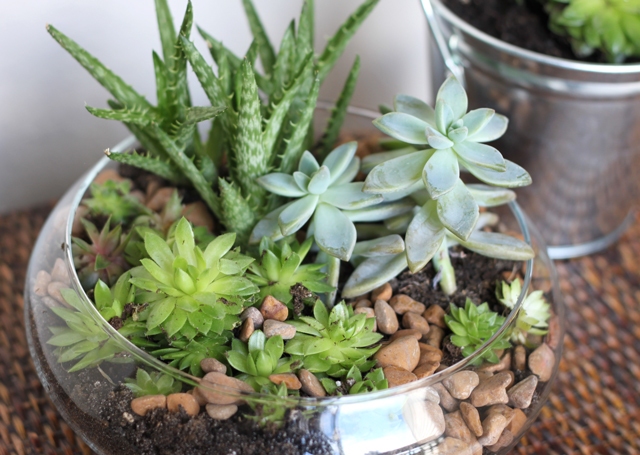 This Enchanting Bowl Of Succulents From Willard U0026 May Is Everything One Can  Dream Of When Planning Their First Mini, Indoor Garden. It Has All The  Texture, ...