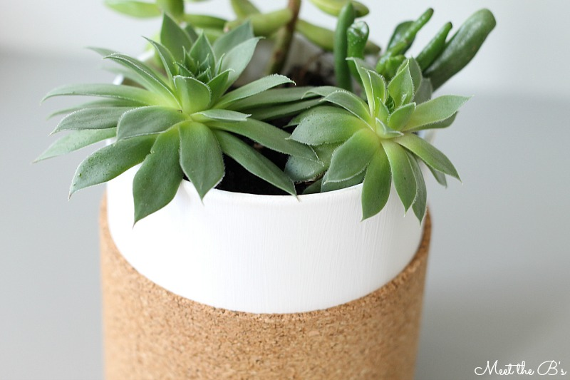 cork jar vase planter