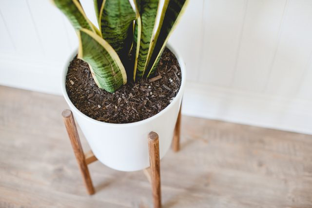 ehow_mid-century-planter_16