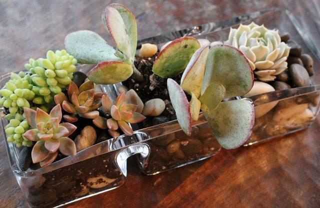 DIY tabletop succulent garden