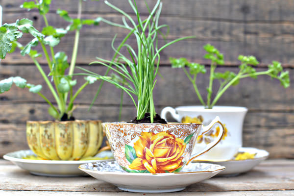 teacup-herb-diy garden