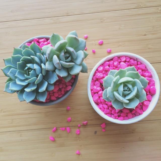 2 neon rocks succulent planters