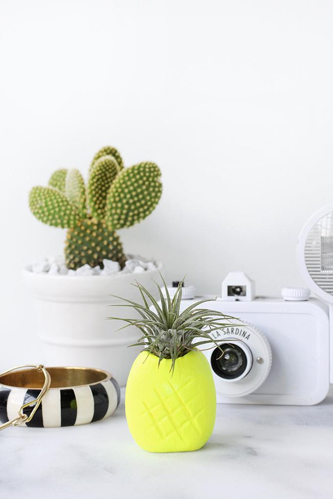 25 pineapple airplant holder