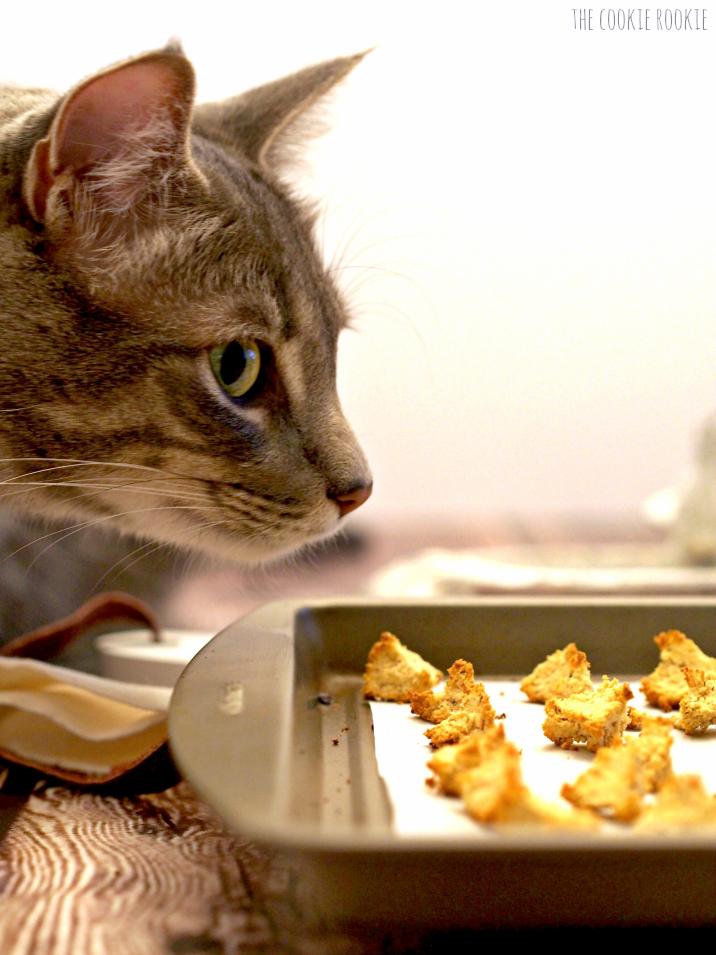 DIY Cat Treat Cookies