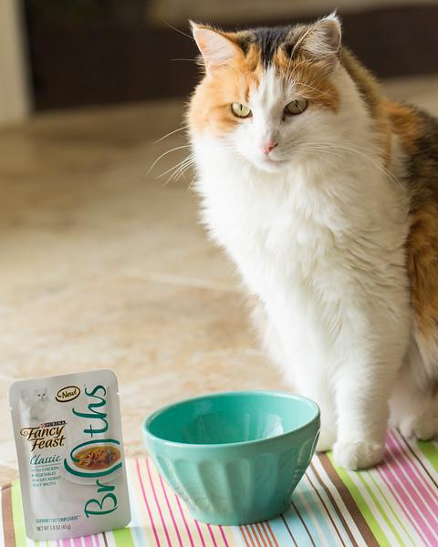 DIy Cat Placemat