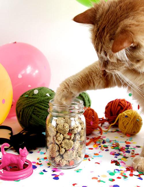 crunchy-cat-treats-diy