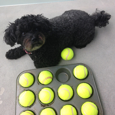 muffin-tin-dog-game-tutorial