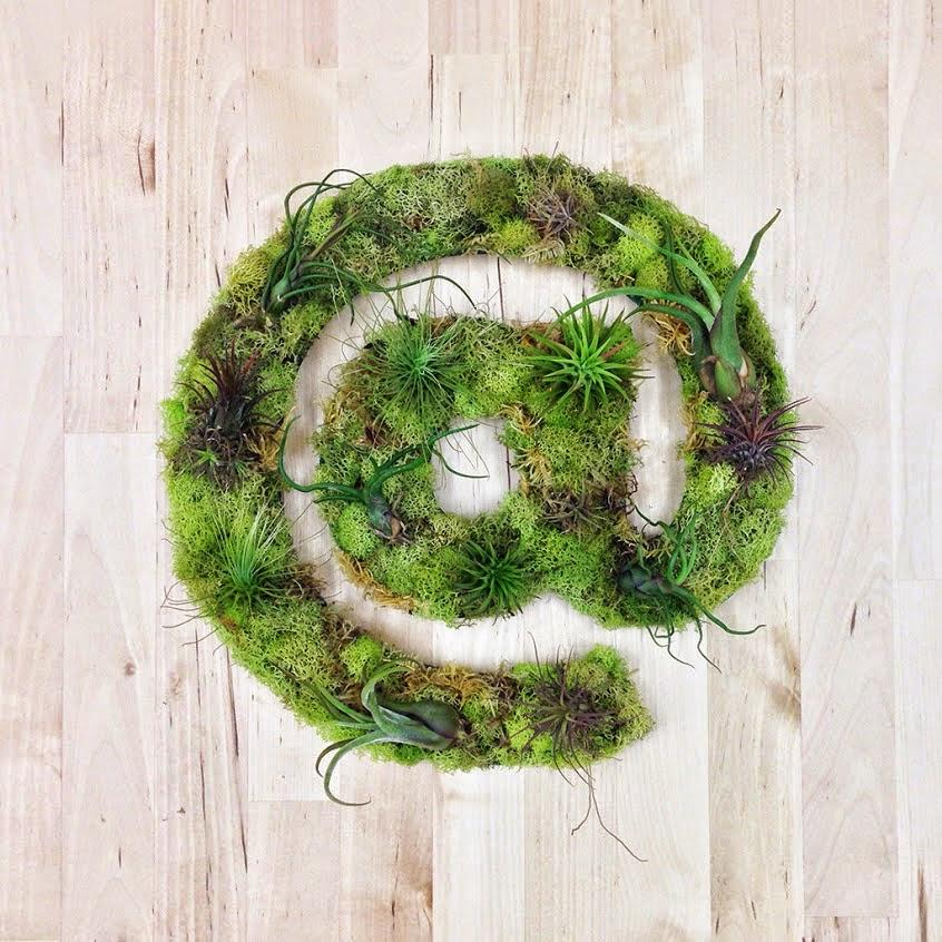 15 at symbol succulents air plants