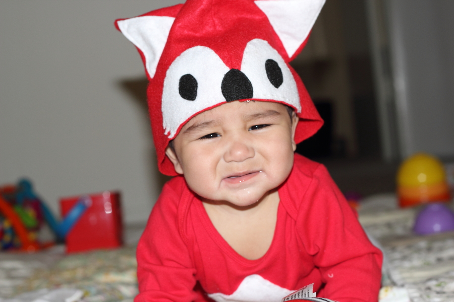 Diy baby fox costume