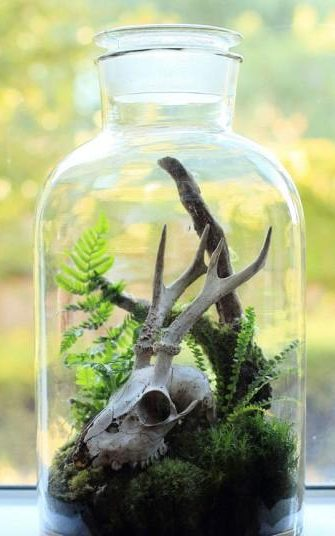 11 diy terrarium gift