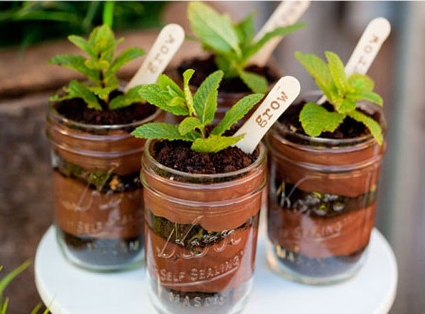 Chocolate pudding plant parfaits
