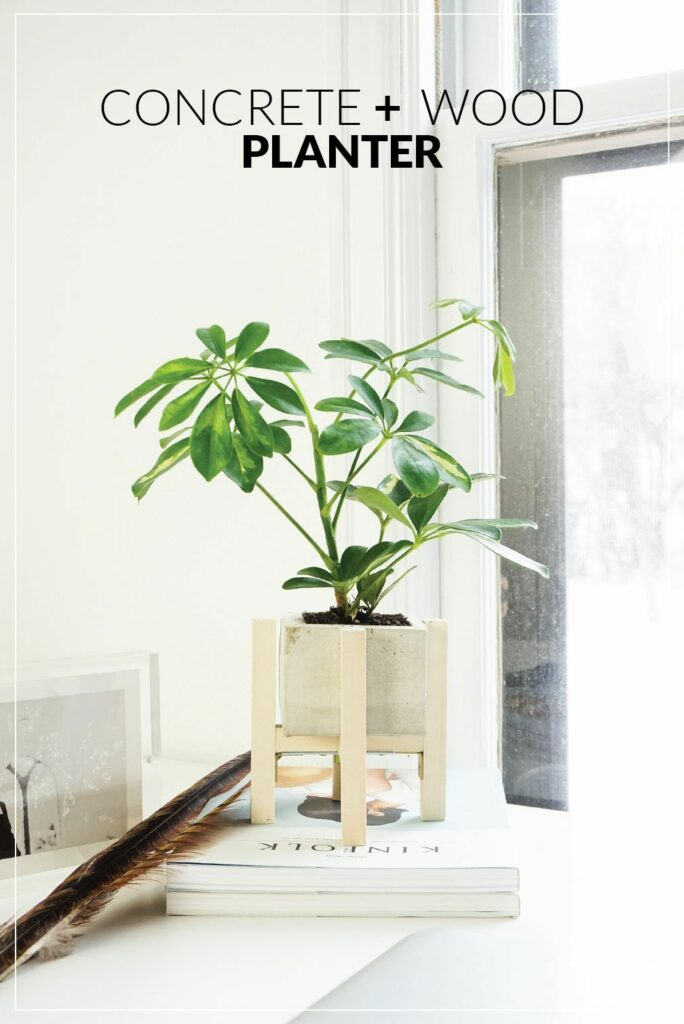 Concrete and wood plant stand