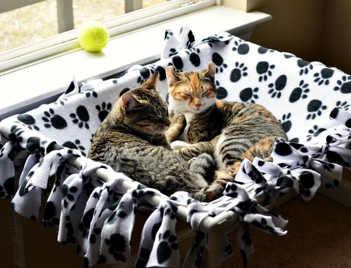 Kittens in a diy no sew pet hammock