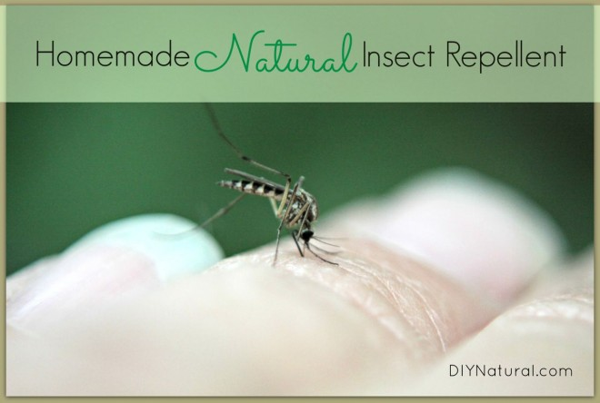 Natural homemade bug repellent by diy naturals