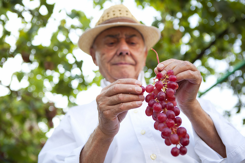 Old age grapes benefits of wine