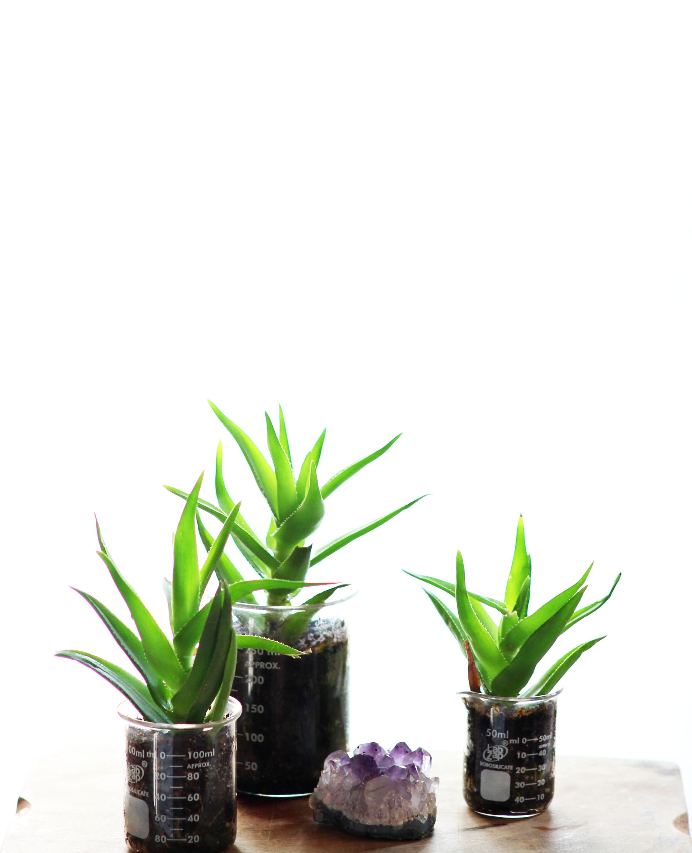 39 beaker planters