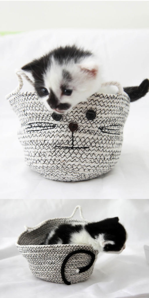 Cat rope basket