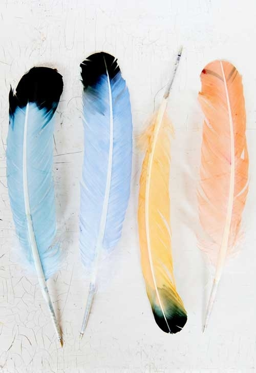 Coloured feathered pens