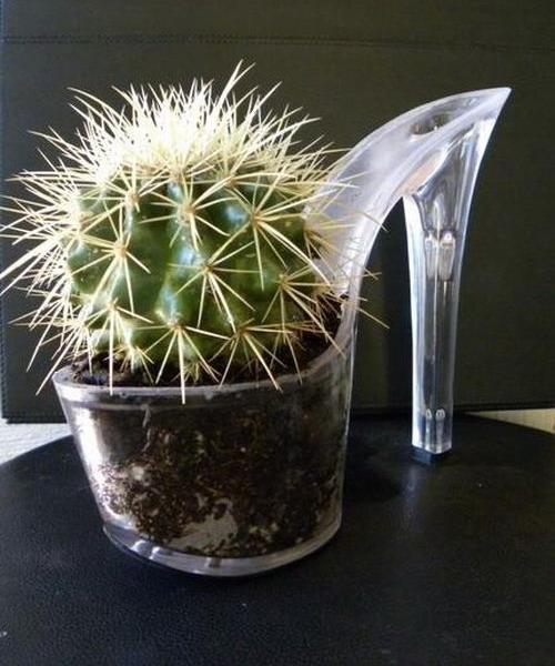 Platformed cactus pot