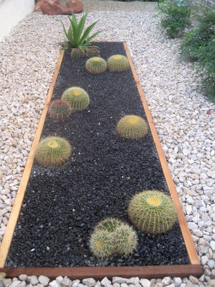 rock beds with cacti
