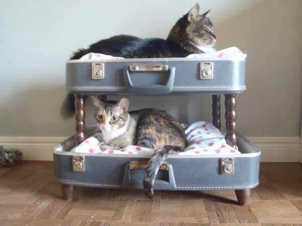 Suitcase cat bunk