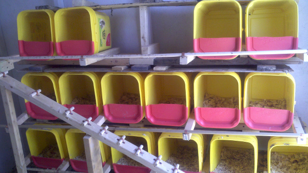 Stacked chicken nesting boxes