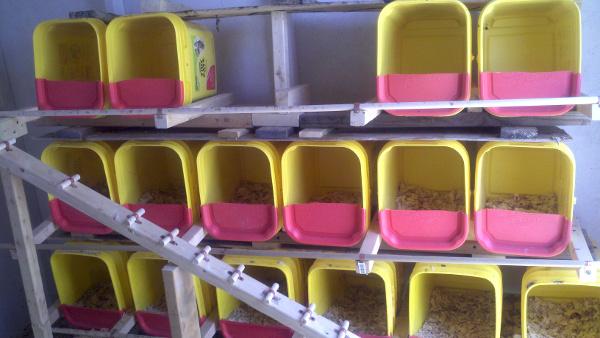 Reuse Cat Litter Buckets