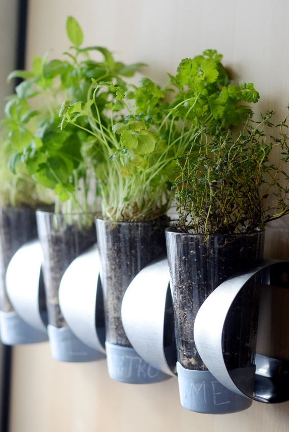 Diy wine rack herb garden