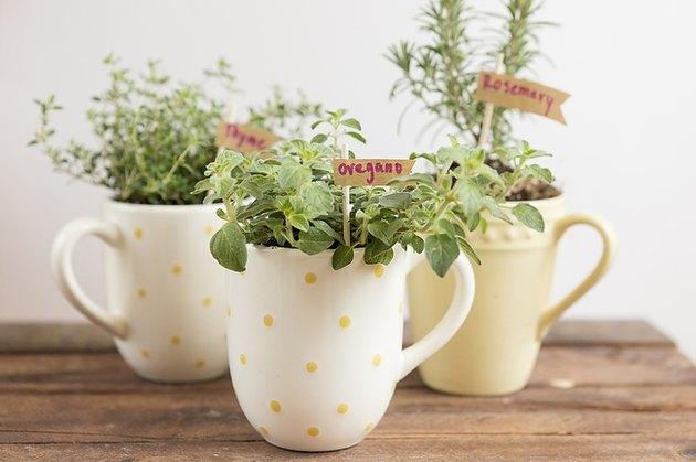 Mug herb