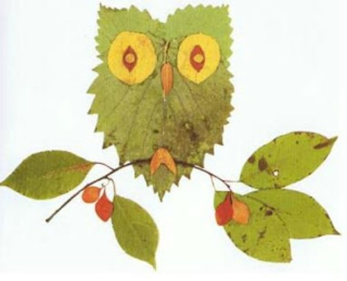 Little leaf owls