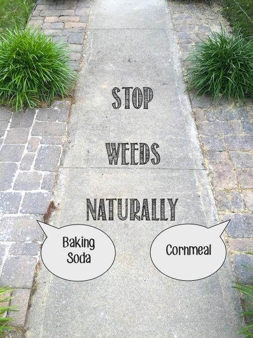 25 Natural Weed Killer Ideas