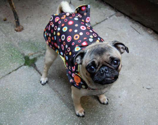 Doggie rain coat
