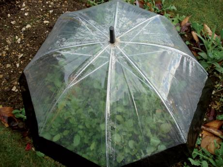Fold away cloche for plants
