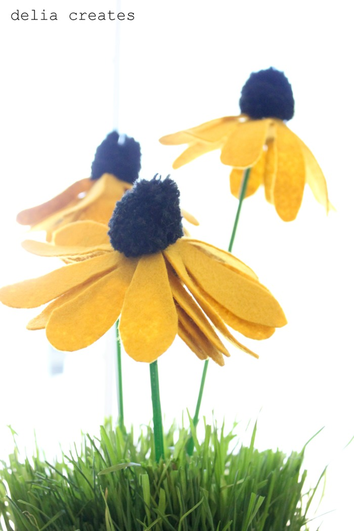 Pom pom black eye susans