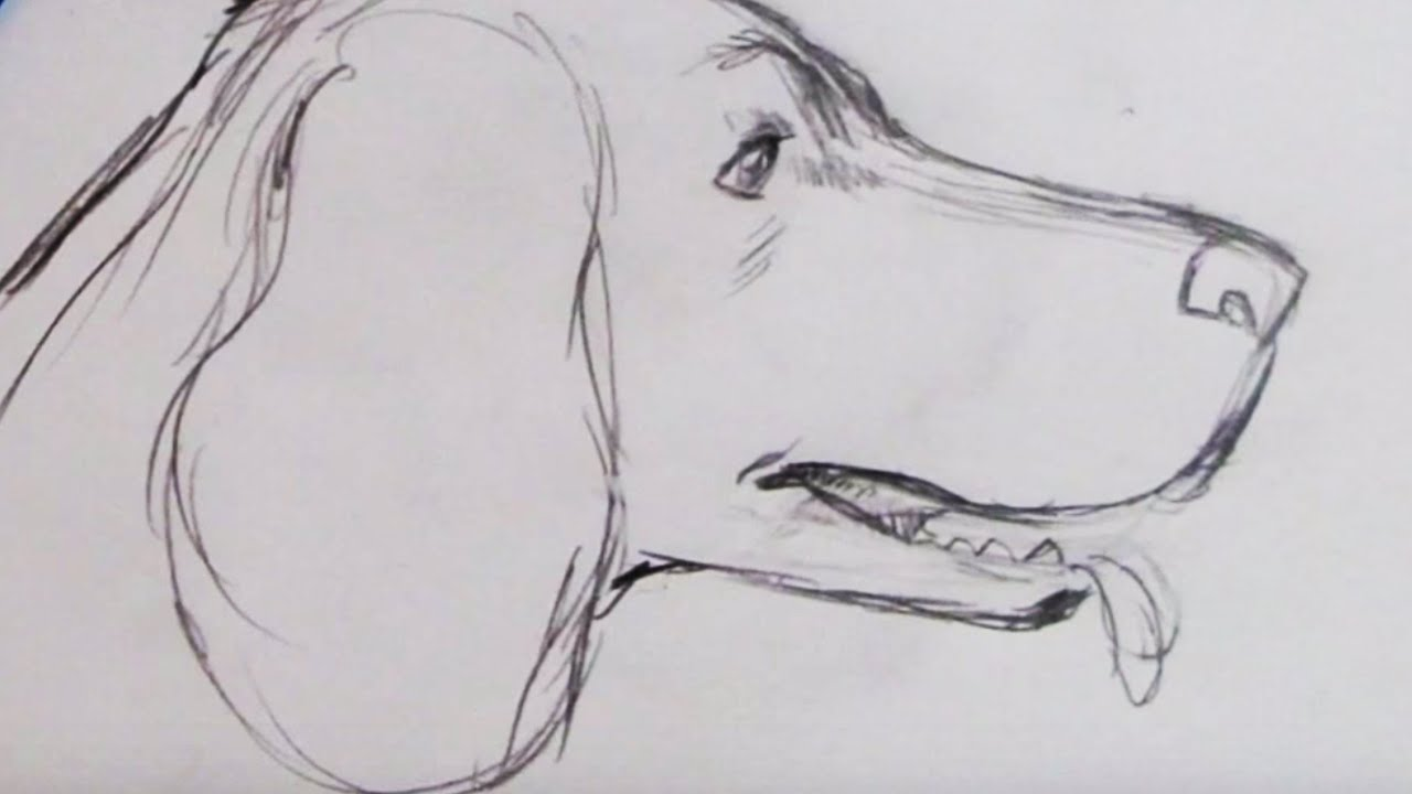 Sketch a spaniel dog