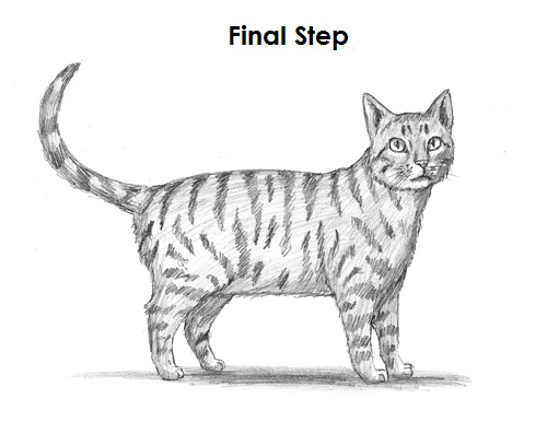 Sketch a tabby cat