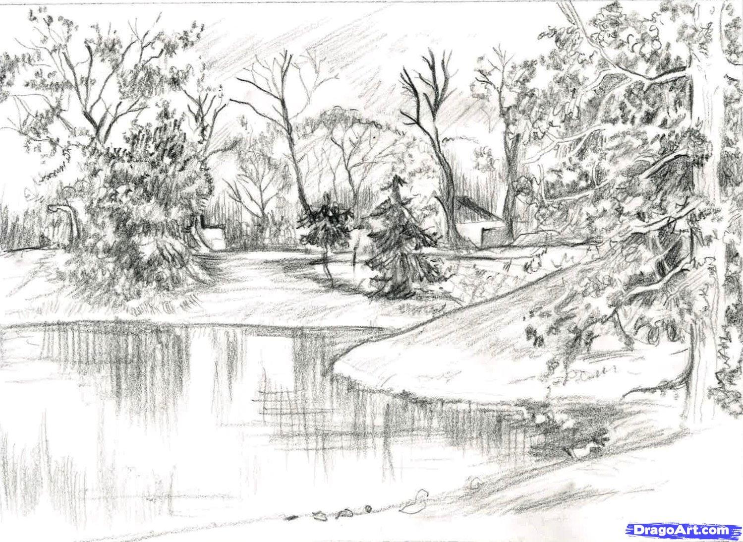 Sketch trees step by step