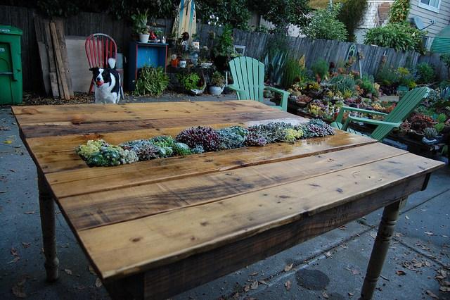 Diy succulenet table