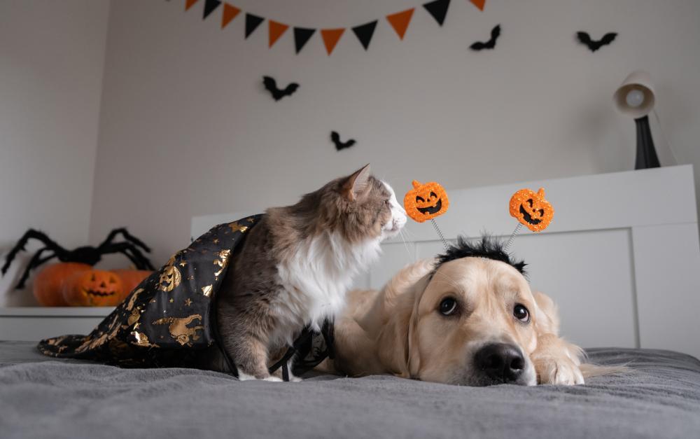 Diy witch decor pet costume