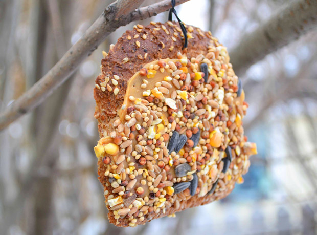 Edible birdfeeders diy