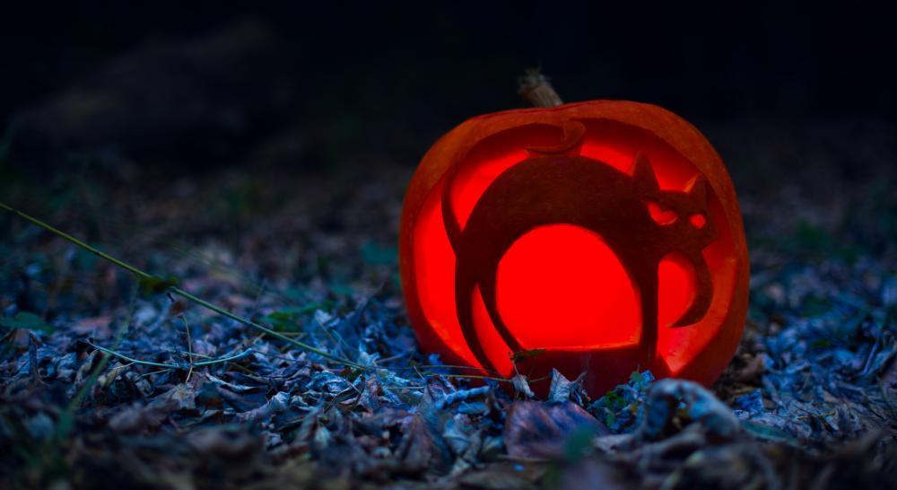 Halloween cat cat easy pumpkin carving