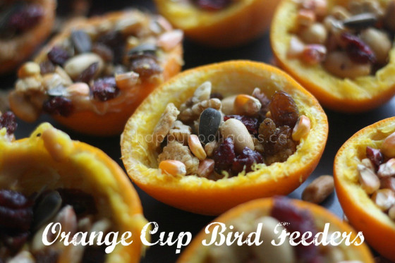 Orange cup bird feeders